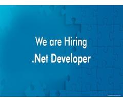 Dot Net Web Developer Cum Designer Required in Dubai