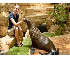 DUBAI Dolphin Show & Emirates ZOO Tickets for Sale
