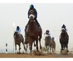 Dubai world Cup Tickets on Sale