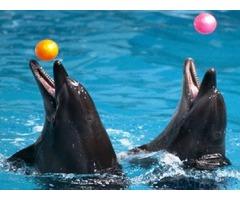 Tickets for Dubai aquarium And Dubai Dolphin show for Sale