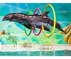 Dubai Dolphinarium Tickets for Sale in Dubai
