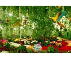Butterfly Garden Tickets for Sale in Dubai