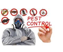 Pest Control Service in Dubai, UAE