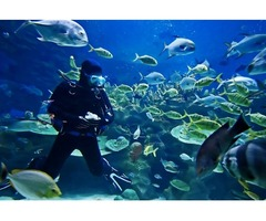 Scuba Diving Discounted Voucher for Sale in Dubai