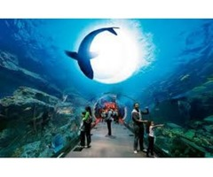 Tickets for Dubai Aquarium & Underwater zoo