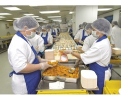 Staff required for food factory in ajman